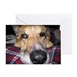 Tripawds Have More Fun Greeting Cards